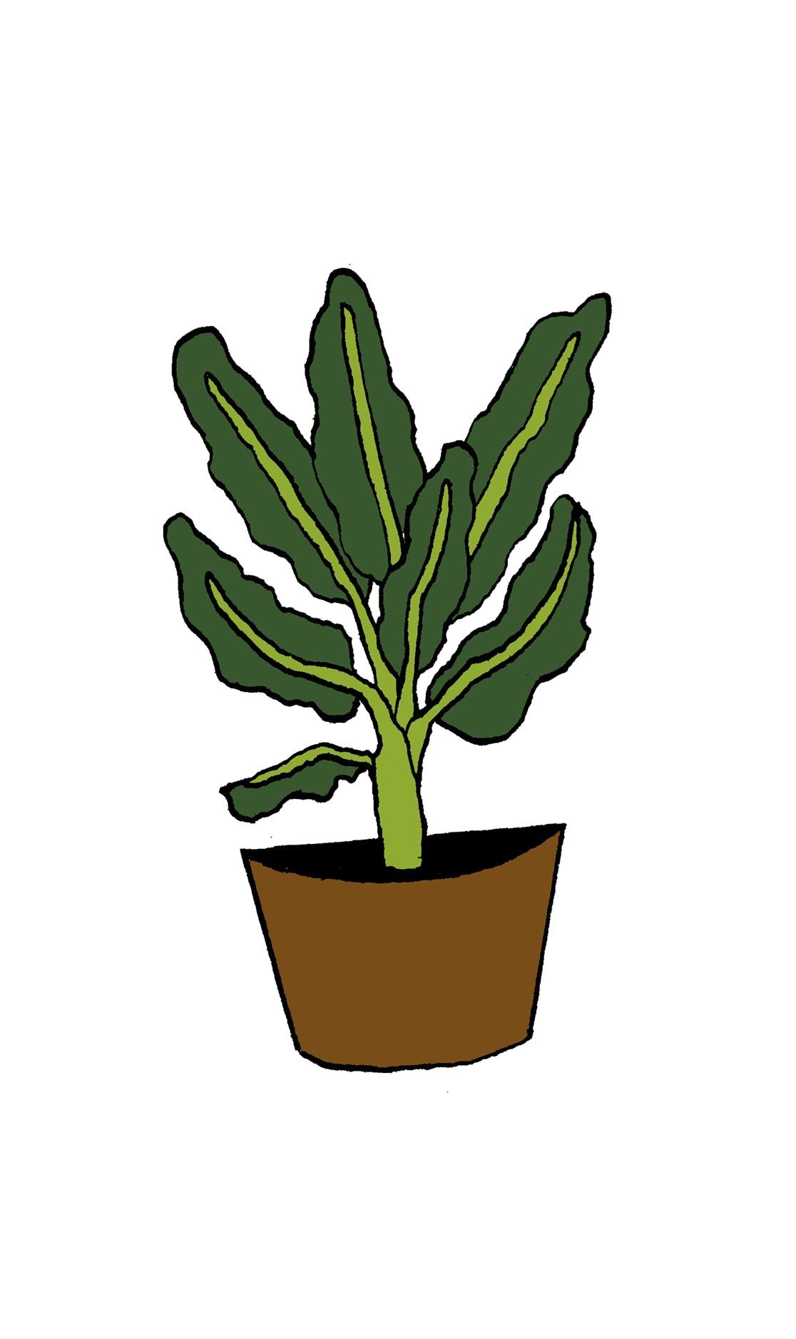 Pflanze Frei 01smaller Copy